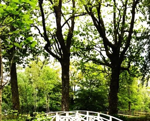 Den hvite broen