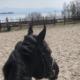 Vakkert skue fra hesteryggen
