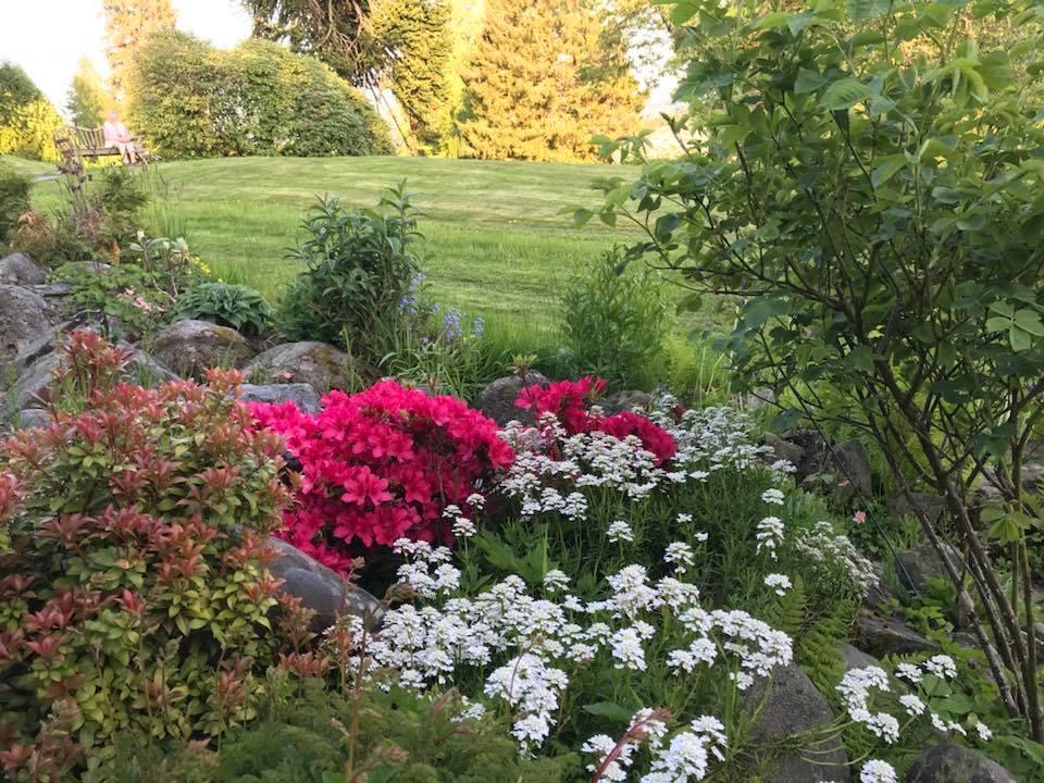 Steinhagen i blomst